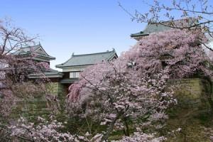 Ueda-Castle-Cherry-Blossom-Festival-3