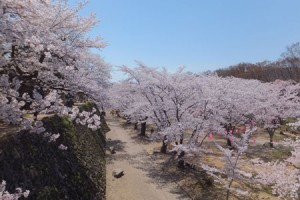 Cherry-Blossom-Festival-at-Ruins-of-Komoro-Castle-4