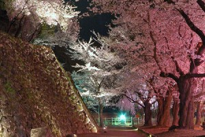 Cherry-Blossom-Festival-at-Ruins-of-Komoro-Castle-2